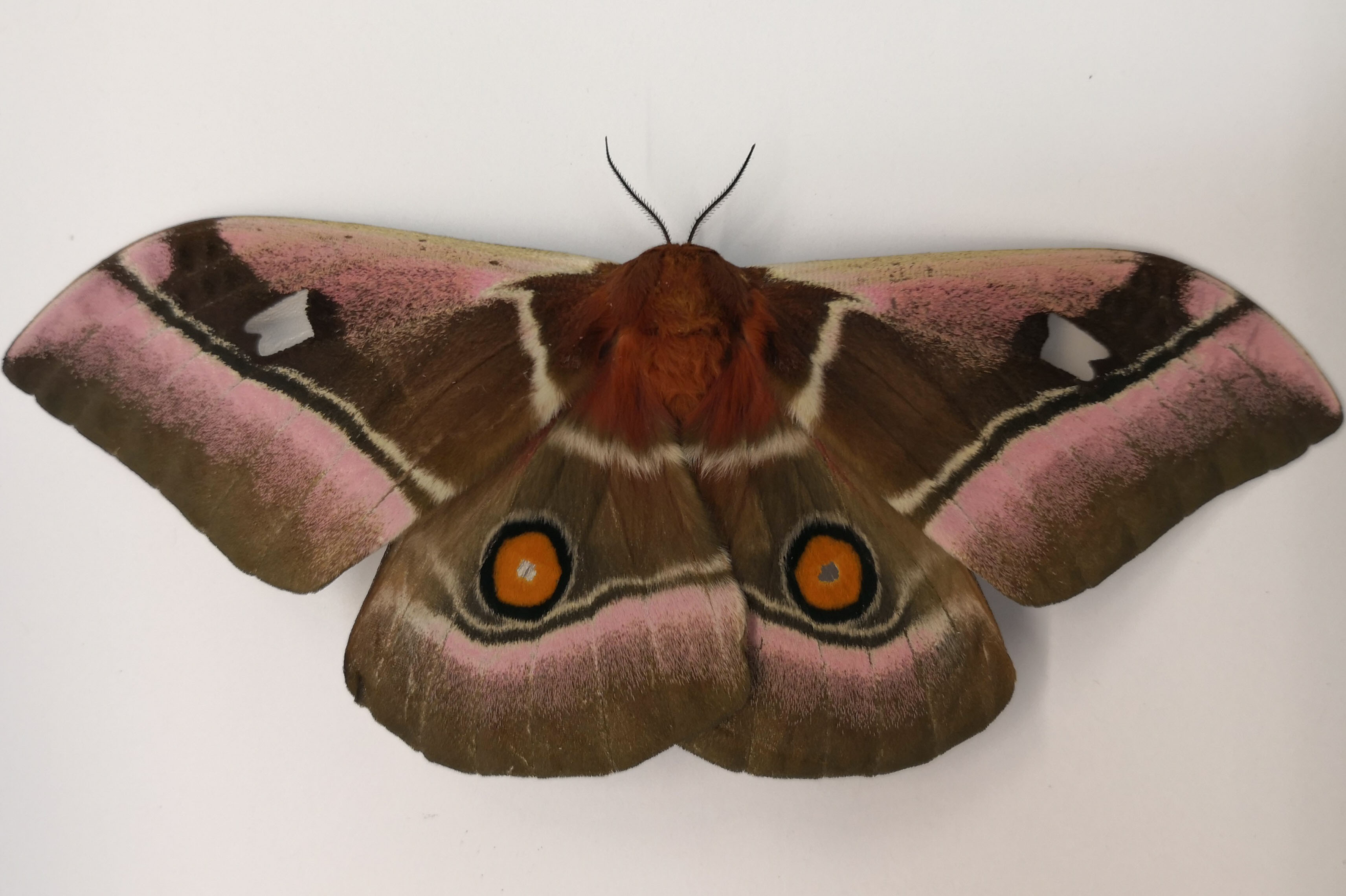 Moth-article