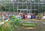 Giant Amazon Water Lilies in the Tropical Zone