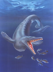 Life restoration of the ancient whale Dorudon atrox that lived about 40 million years ago.