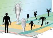 Evolution of eurypterids.