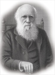 Line drawing of the elderly Charles Darwin