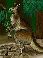 Artist's impression of Procoptodon, a genus of giant short-faced kangaroo living in Australia during the Pleistocene epoch