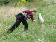 A researcher collecting pollinators