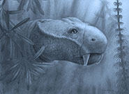 Artist's reconstruction of the head of the anomodont Dicynodon lacerticeps