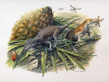 Image of the Early Jurassic basal mammals, Morganucodon and Kuehneotherium, hunting their prey on the small island they shared in what is now Glamorgan, southern Wales.  Drawing by John Sibbick
