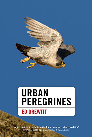 Image of the cover of Urban Peregrines