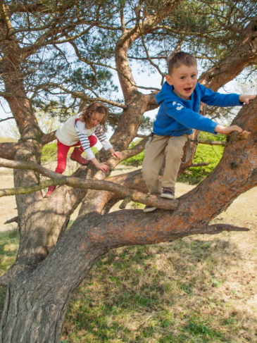Generic image of children climbing a tree