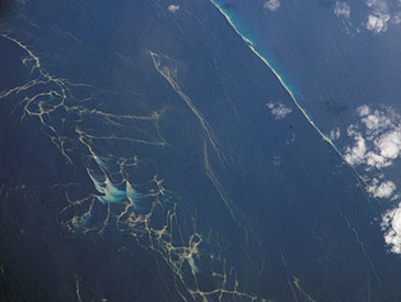 A plankton bloom in the Capricorn Channel off the Queensland coast of Australia - Trichodesmium—a photosynthetic cyanobacteria and nitrogen fixer.