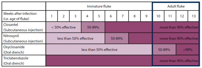 Graph showing when to treat adult fluke and with which treatment
