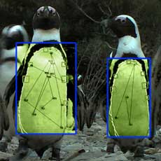 Biometric penguin recognition system in operation at Robben Island, South Africa