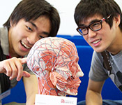 Open day visitors looking at a model of the human head
