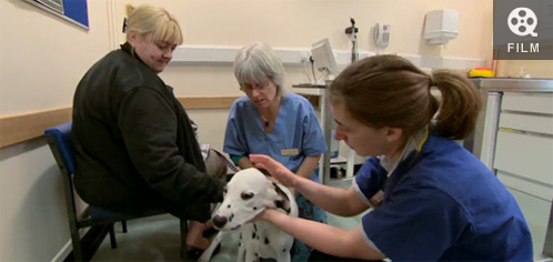 Video screengrab - vet and  